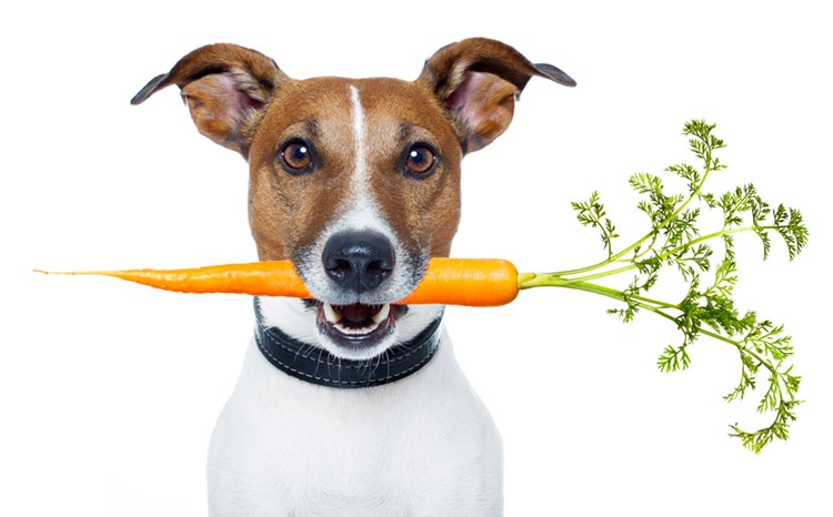 4 Essential Elements of a Dehydrated Vegetable Partner for Pet Food Development