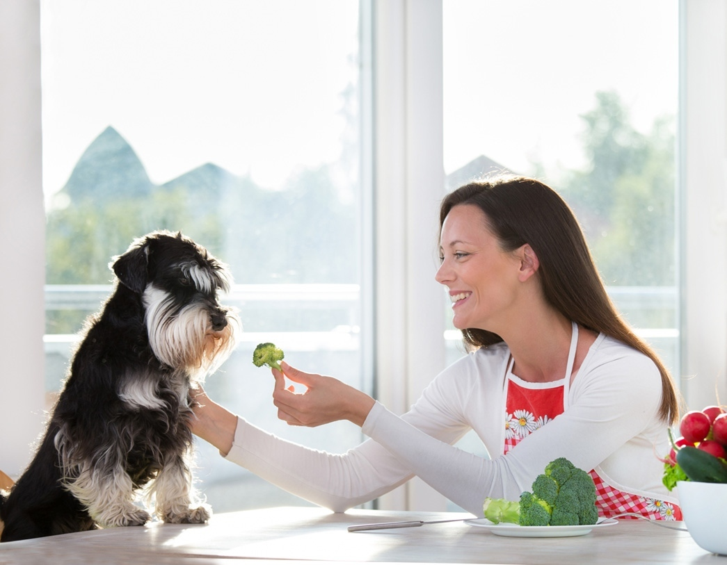 3 Considerations for Healthier and Cleaner Pet Food Ingredients