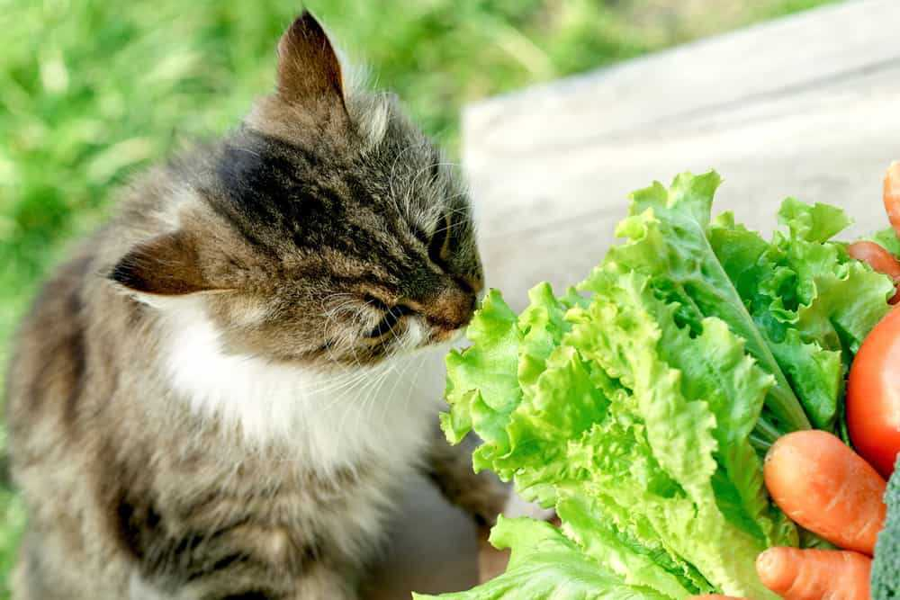 What's in the Healthiest Cat Food?